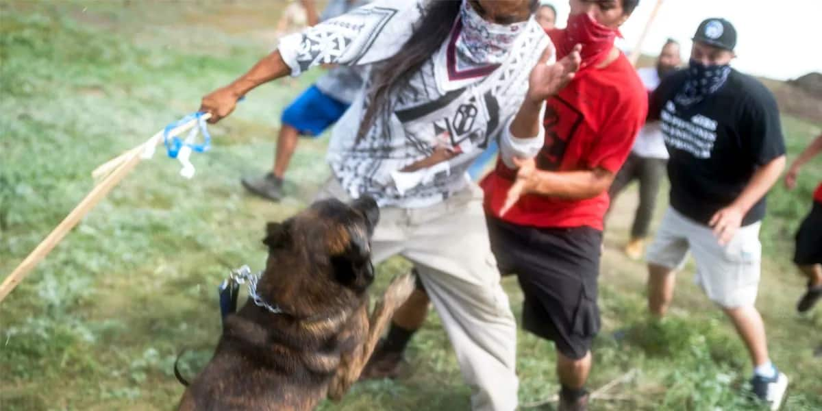Pipeline Company Terrorizes Native American Protesters With Attack Dogs (VIDEO)