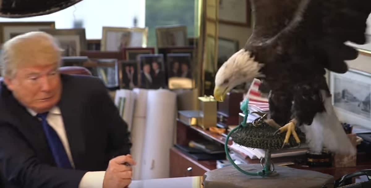 WATCH Donald Trump Gets Attacked Repeatedly By A Bald Eagle Named Uncle Sam